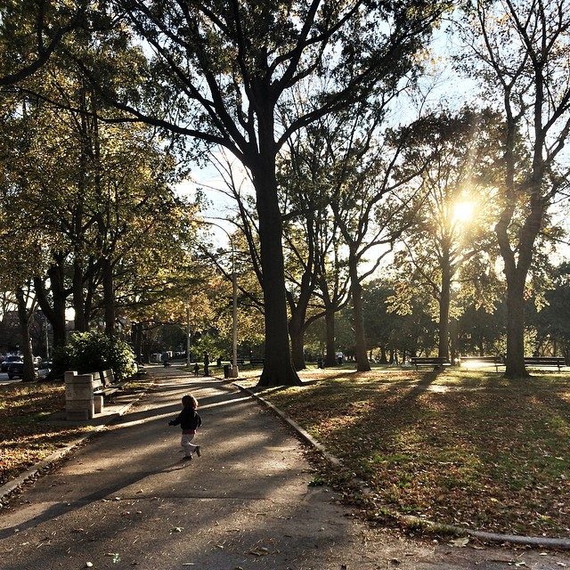 Latest fascination - #trees. ?? Max runs through the park to touch and point out every. single. one. #astoriapark is just the worst place ever to have to walk through let me tell you this scenery is just rubbish. #growingupmaximo