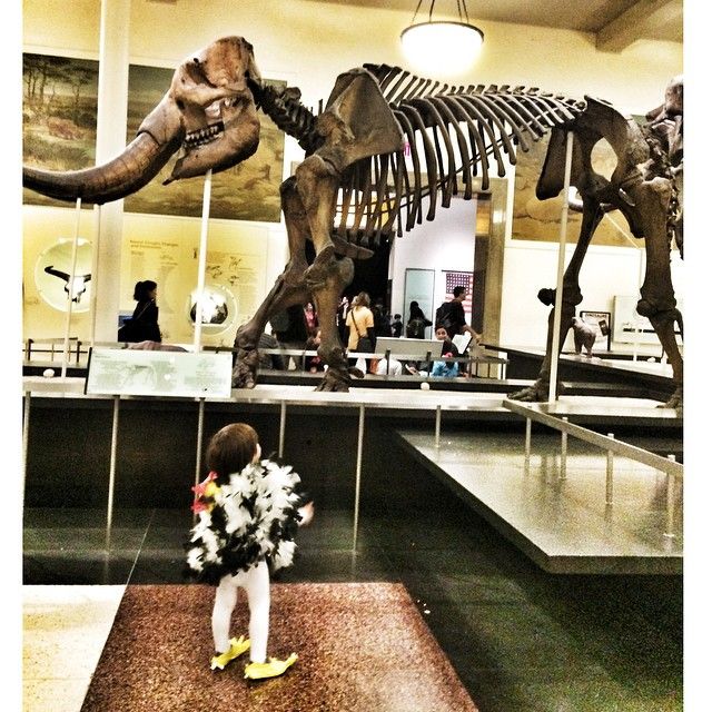 What came first, the #chicken or the #dinosaur? #trickortreat at the @amnh among the #fossils so spooky! ?