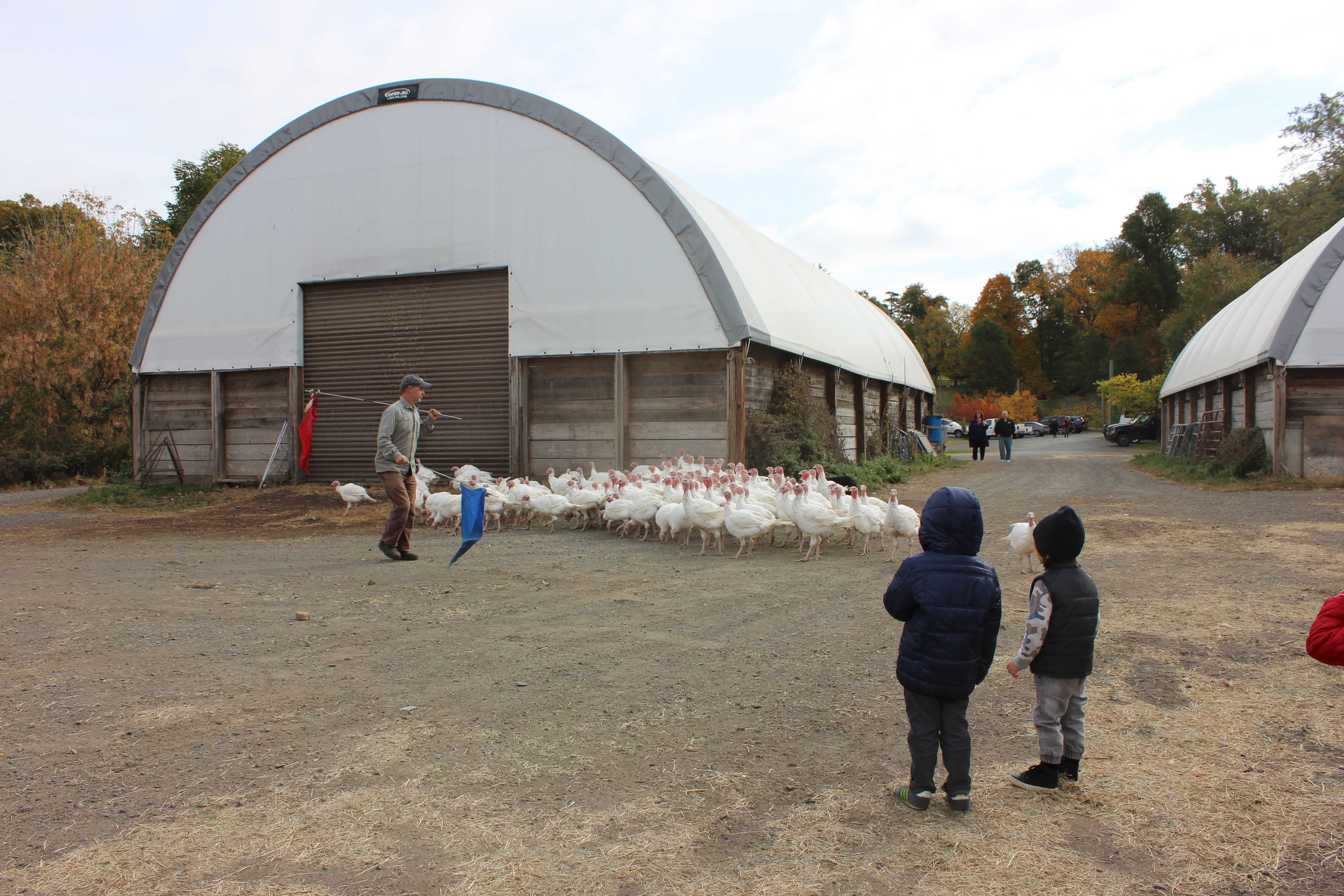 Stone Barns Center for Food and Agriculture - turkeys