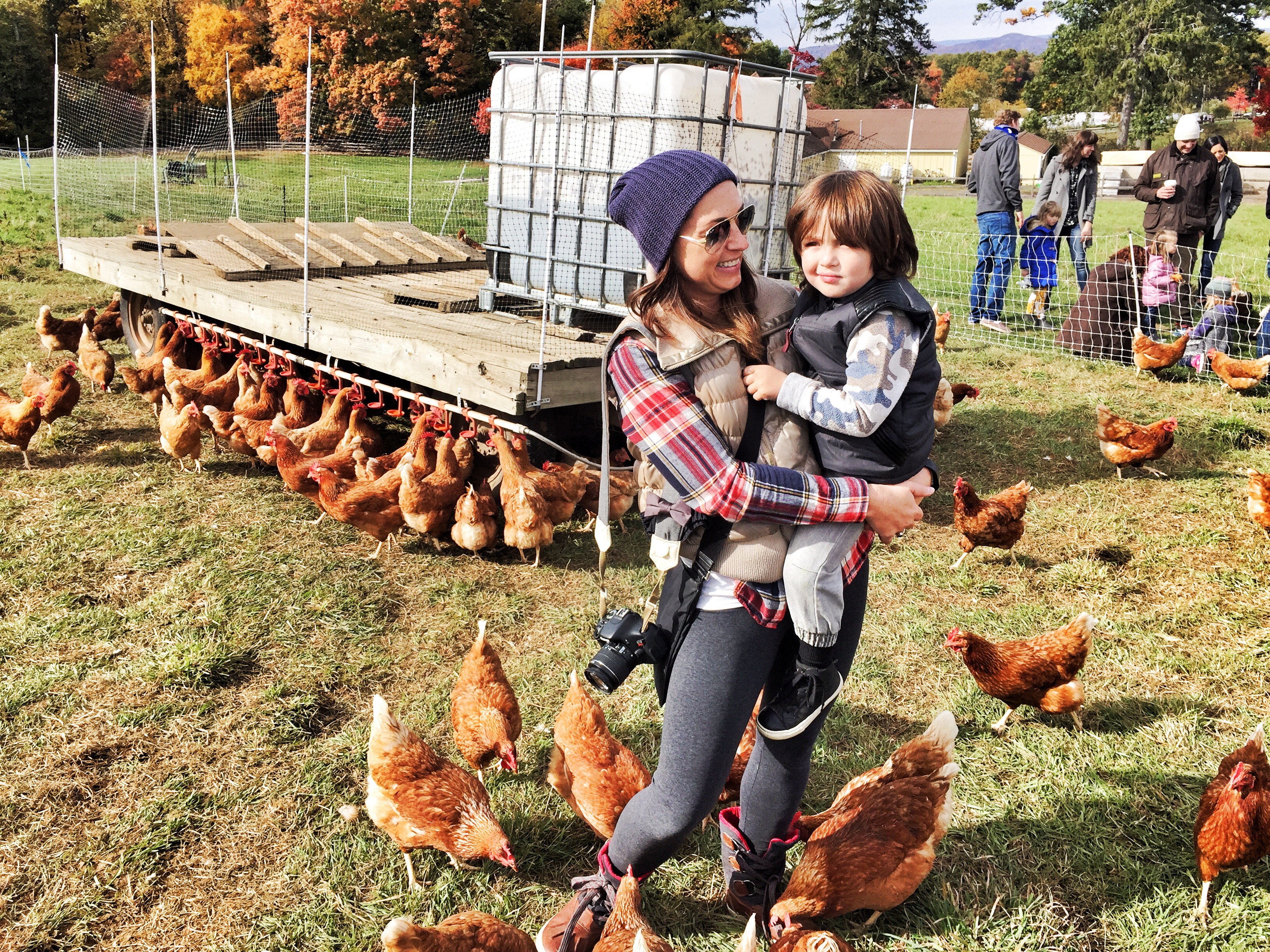 Stone Barns Center for Food and Agriculture - chickens